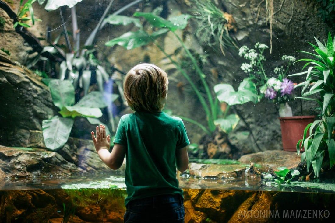 boy looking at fish at aquarium at horniman museum