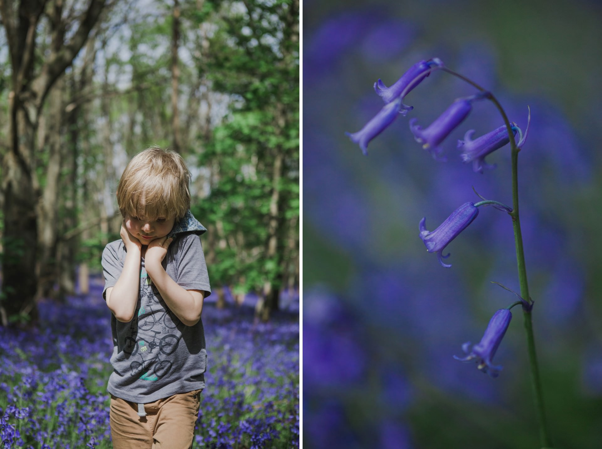 child standing in bluebell forest